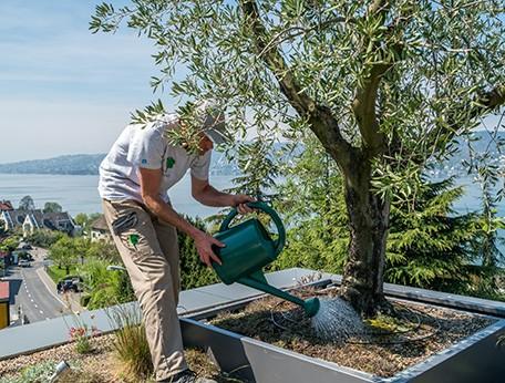 Berger Gartenbau Gartenpflege